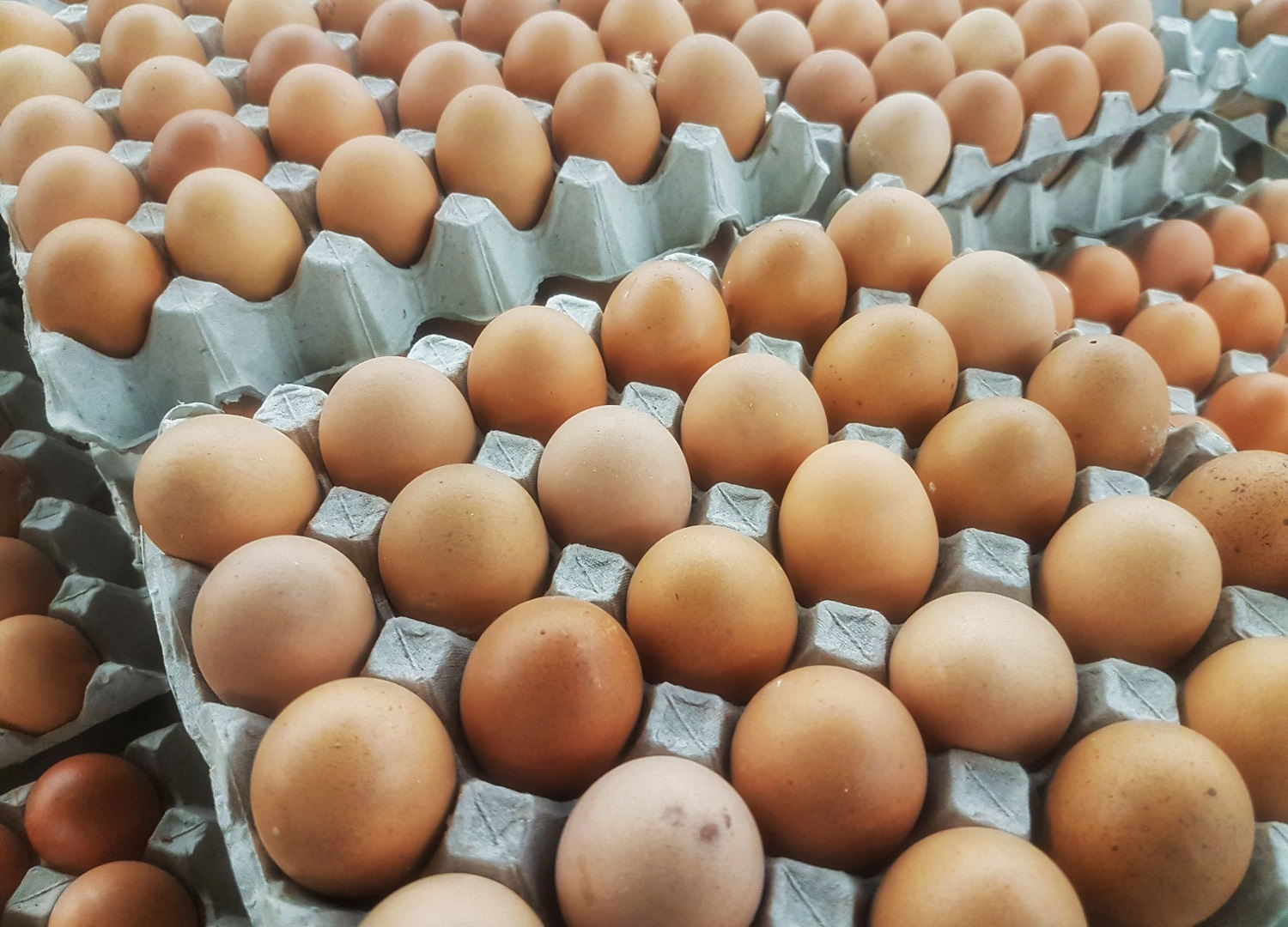 Egg supplier fined £60,000 after forklift crushes operator